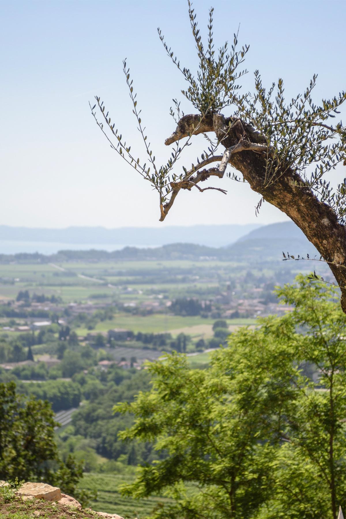 relax-view-verona